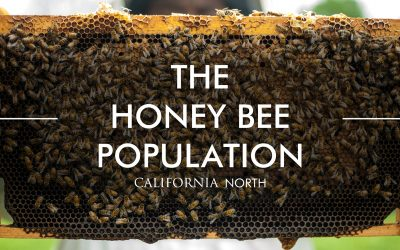 The Honey Bee Population.Two
